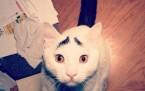 Ünlü Kediler