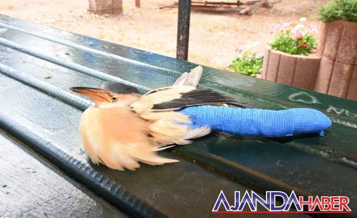 Yaralı Kuşa Toroslar Sahip Çıktı