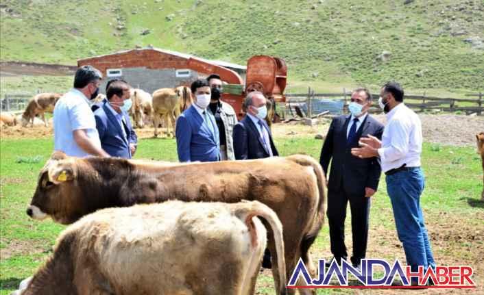 Hayvancılık sektörü keskin viraja girdi