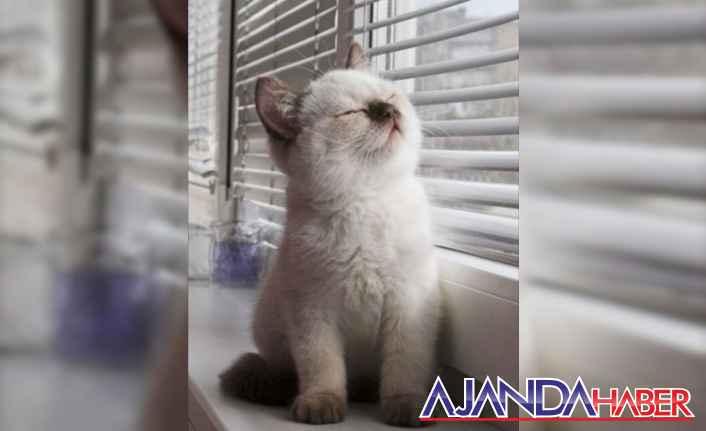 Kedi güzeli