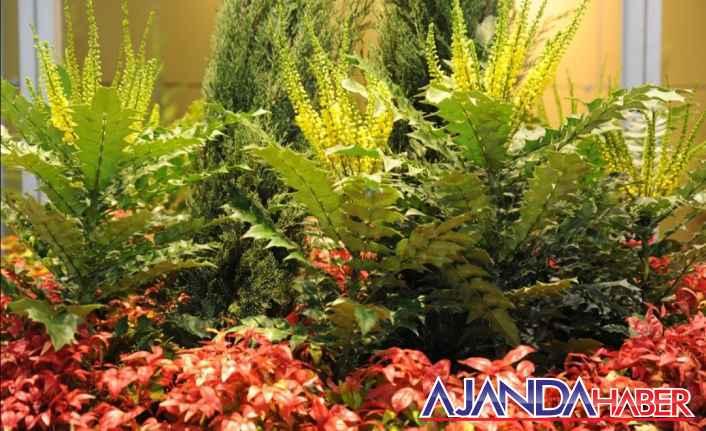 Süs bitkileri Yetiştiricileri ihracat istiyor