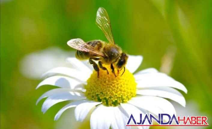 Arılar ölürse insanlarda ölürmü?