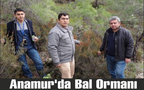 Anamur'da Bal Ormanı