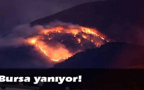 Bursa'daki orman yangını sürüyor
