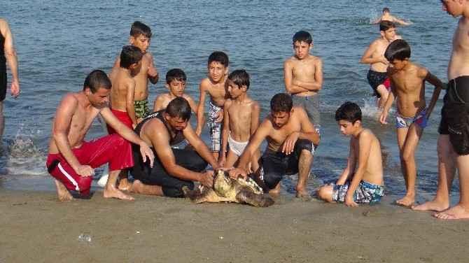 Mersin'de Yaralı Caretta Caretta Sahile Vurdu