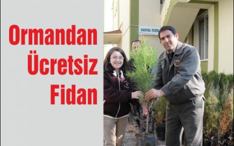 Ormandan Ücretsiz Fidan