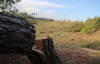 Göz Göre Göre Ormanı Yok Ediyorlar