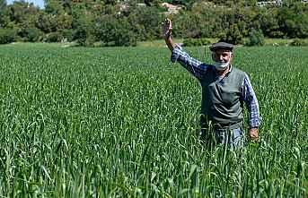Büyükşehir'den Yerel Buğdaya Teşfik