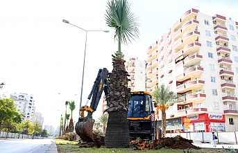 Forum kavşağında ağaçlar koruma altında