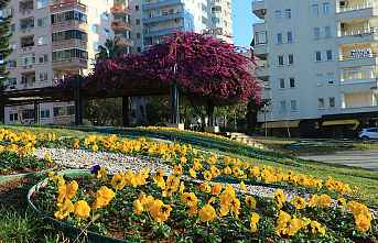 Mersin'de Caddeler Çiçek Açtı