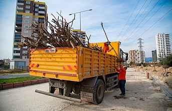 Çalışmalarda Ağaçlar Koruma Altında