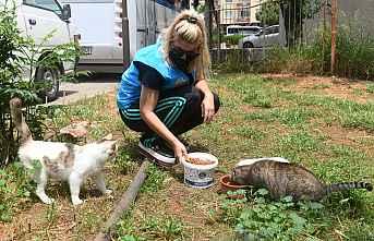 Sokak Hayvanlarını yalnız değil