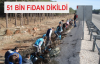 51 Bin Fidan Dikildi