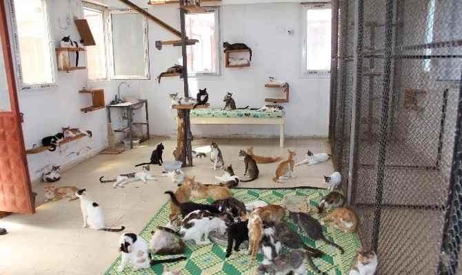 Türkiye'nin İlk Yaşlı Ve Özürlü Kedi Bakımevi Mersin'de