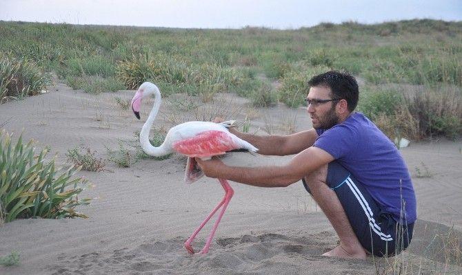 Yaralı Flamingoyu Balıkçılar Kurtardı