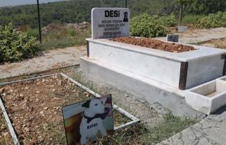 Mezitli Belediyesi Hayvan Mezarlığı